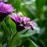 cseppecskevirág